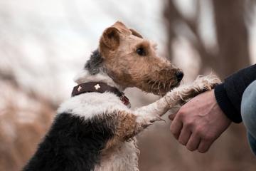 dog-3385872_1920